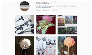 instagram screenshot with 6 wildflowers