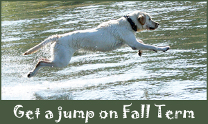 Get a jump on Fall Term.  Labrador retriever jumping in the water.